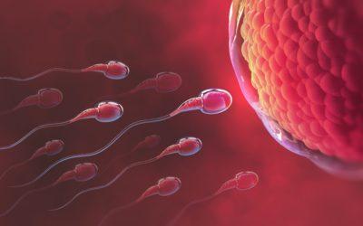 Pohyb spermií