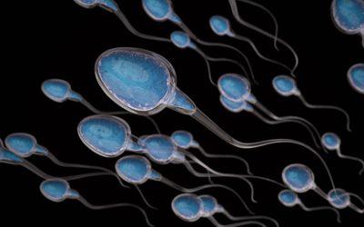 Množství spermií a koncentrace